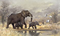 Johan Hoekstra Wildlife Art Collection ...