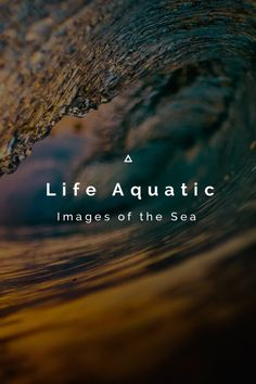 Life Aquatic Images of the Sea My life with my friends in and around the sea. I Love the Ocean more than anything in the World. Being it, photographing it, makes me feel like I'm a part of it. I hope you enjoy these images that I'm so grateful to be able to