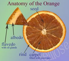 diagram of an orange fpv racing drone wiring parts plants gardening fruits fruit anatomy
