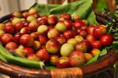 Camu Camu Fruit - Superfood Giveaway! Feel Smarter and More Beautiful - YouthH2O shots