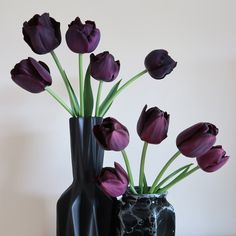 One of the darkest varieties of tulip is the award-winning purple-black Triumph tulip: 'Paul Scherer'.