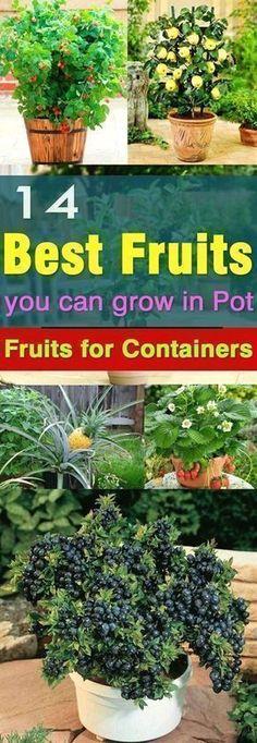 Fruit Garden, Edible Garden, Garden Pots, Fruit Plants, Potted Garden, Garden Web, Herbs Garden, Garden Oasis, Patio Fruit Trees