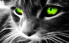 #Cats #Animals #Wallpapers  http://www.hdwallpapersarena.com/hd-pictures.html