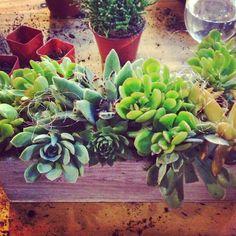 Cebolla Floral Arranging Class: Succulents