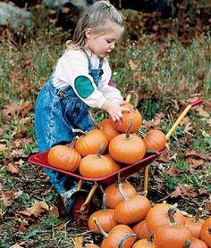 Pumpkin Baby Bear | Garden Seeds and Plants