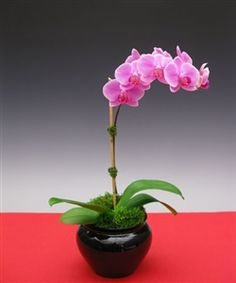 Pink Orchid Flowers - Pink blends beautifully with any decor whether modern or contemporary..
