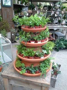 """JM home and garden plant display  Would be good to use for 4"""" pots"""