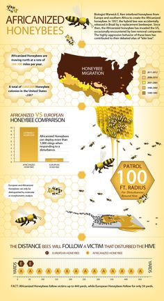 Updated Facts & Statistics On Africanized Honeybees Including Distribution Map & Behavior Analysis. See Full Image at www.propacificbee.com/infographic/AHB/infographic.php