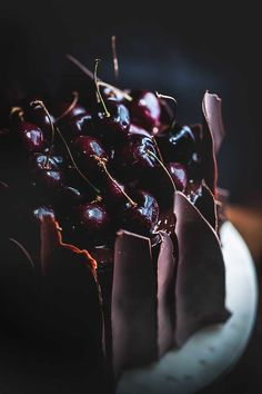 black forest cake and chocolate shards - Cooking & Baking - Kuchen Chocolate Shard Cake, Chocolate And Vanilla Cake, Chocolate Shop, How To Make Chocolate, Chocolate Fondant, Modeling Chocolate, Chocolate Treats, Chocolate Covered, Cookie Recipes For Kids