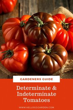 Many gardeners grow plenty of tomatoes successfully without pruning or knowing the difference between the two types. Let's explore some of the differences between determinate tomatoes vs. indeterminate tomatoes so that you can make an informed purchase, provide the proper care for and get the most yields from your treasured tomato plants. Gardening For Beginners, Gardening Tips, Determinate Tomatoes, Starting A Vegetable Garden, Tomato Plants, Growing Tomatoes, Fruit Garden, Organic Vegetables, Garden Inspiration