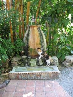 cat at Ernest Hemingway's home in Key West ( that's the urinal he dragged from Sloppy Joe's)