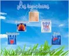 http://www.naturopathie95.com/archives/2013/07/29/27743327.html ....... Quand nos fonctions d'élimination sont débordées par une alimentation trop riche et déséquilibrée, notre organisme finit par s'encrasser, prélude à des maladies bien plus graves.  La naturopathie préconise de stimuler nos émonctoires pour un « nettoyage en profondeur ».  En naturopathie, la santé dépend étroitement de l'alimentation, de l'hygiène de vie, des émotions du psychisme et du bon fonctionnement des…