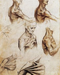 Leonardo Da Vinci Exhibition Shows Extraordinary Accuracy Of Anatomical Sketches. One of the dissected corpses of Da Vinci was a man 100 years old. Anatomy Study, Anatomy Reference, Art Reference, Muscles Of The Neck, Bones And Muscles, Anatomy Sketches, Anatomy Drawing, Human Anatomy Art, Gross Anatomy