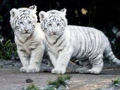 cute wild animals - Google Search