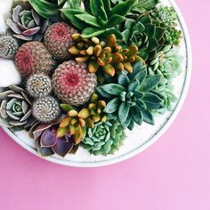 This lush bouquet was inspired by the color wheel. What a stunner! #dreamy #prettyplanting #succulents #cacti #spiralsofcolor #planting #shoppigment