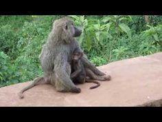 Affenmama mit Baby und Elefantenfamilie - YouTube