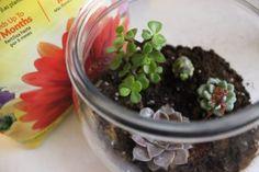 DIY Succulent Terrarium - The Thrifty Millennial