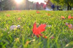 4 ways to tend to your lawn this fall  #fall #LawnCare Lawn Care Schedule, Lawn Care Tips, Compost, Easy Turf, Piscinas Gre, Fall Lawn Care, Organic Lawn Care, Turf Installation, Pergola Pictures