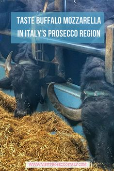 Did you know Italy's Prosecco region is one one hour from Venice making it the perfect day trip from Venice...or why not stay for a few nights. An ideal wine tasting tour from Venice, get to know Italy's under-discovered Prosecco region. And don't forget the fresh buffalo mozzarella tasting. Day Trips From Venice, Wine Club Membership, Wine Direct, Wine Searcher, Buffalo Mozzarella, Different Wines, Regions Of Italy, Wine Gifts
