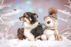 Best Buddies Teddy Bear, Animals, Animal Photography, Animales, Animaux, Teddy Bears, Animal, Animais
