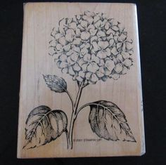 """2001 STAMPIN UP WM RUBBER STAMP """"HYDRANGEA""""  FLOWER GARDEN LEAVES OUTDORS #StampinUp #Background"""
