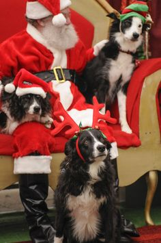 Border Collie Extravaganza: Oregon Humane Society's Santa Paws: pet portraits fundraiser, fantastic keepsake photos.  Important! Check Nov 1st calendar for schedules: www.oregonhumane.org/