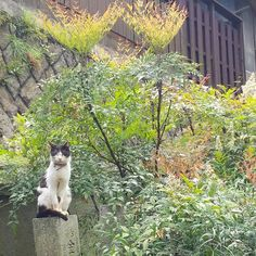 *尾道で出会ったネコ*  置物みたい(笑)  #尾道 #ネコ #cat #艮神社 #猫の細道