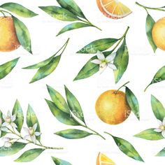 Find Watercolor Fruit Orange Seamless Pattern Flowers stock images in HD and millions of other royalty-free stock photos, illustrations and vectors in the Shutterstock collection. Thousands of new, high-quality pictures added every day. Watercolor Fruit, Fruit Pattern, Vintage Type, Orange Blossom, Free Vector Art, Flower Patterns, Illustration, Flowers, Painting
