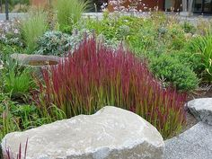 Beautiful garden grasses
