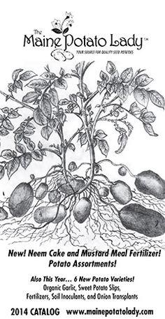 Organic seed potatoes, fingerlings, onion sets, shallots and garlic - The Maine Potato Lady