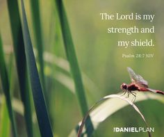 "God knows we are all shaped differently so there's an ""exercise"" out there for every one of us. The best exercise is the one that you will actually do because you enjoy it. Psalm 28 7, Psalms, The Daniel Plan, Lord Is My Strength, Bible Love, Exercise, God, How To Plan, Excercise"