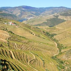 Breathtaking view of the Douro Valley, Portugal //  FoodNouveau.com  Falling in Love with Northern Portugal | via Food Nouveau Why is Portugal's Douro Valley so enticing? Read on to discover three obvious, but compelling reasons why you should go to Northern Portugal.