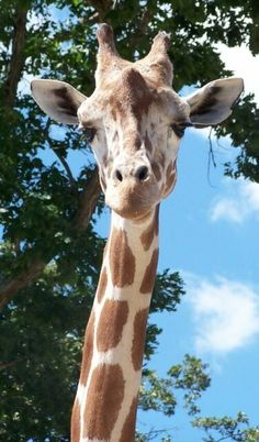 Metro Richmond Zoo - We LOVE it - you can feed and pet the giraffes!!! :)