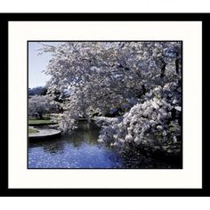 Great American Picture Dogwood Tree Framed Photograph - LAN6