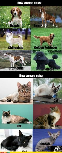Cats vs. Dogs hahahaha