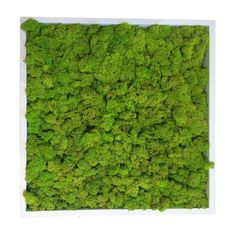"""Add a pop of color with these stunning botanical moss tiles. Spring green preserved moss placed in a wooden frame, these art pieces will hang with style in your modern living room. - 10""""W x 10""""H - Pre"""