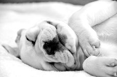 French Bulldog...my favorite