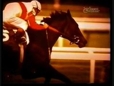 Ruffian Tribute - For the best race horse ever! - http://www.watchtvseriesonline.com.au/watch-sports-online/horseracing/ruffian-tribute-for-the-best-race-horse-ever/