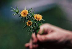 ❥ Versos en flor – Solo por la luz