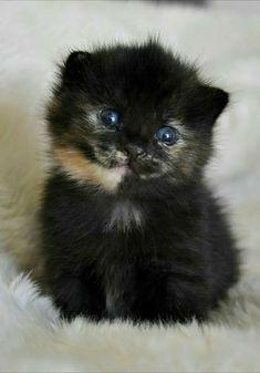 So very cute