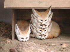 Foxpile