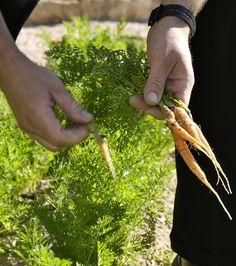 jardin biologique Organic garden #relaischateaux #baumaniere #bio #organic