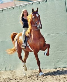 Saddlebreds really are the best! Thoroughbred Horse, Dressage, Majestic Horse, Beautiful Horses, All Breeds Of Dogs, Horse Facts, My Champion, Morgan Horse, American Saddlebred