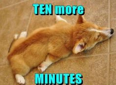 Snooze Buttons are Such Sweet Torture #dogs