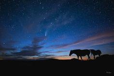 #homedecor #wallart #equinefineart #fineartphotography #horseasart Photo, Fine Art, Wall Art, World Photography Day, Image, Photography Description, Horse Silhouette, Instagram Images, Fine Art Photography