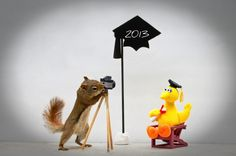 Celebrating a miniature Big Bird's graduation. | 9 Things The Squirrels Are Up To These Days