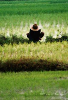 la récolte, Thaïlande ©Corinne Granger