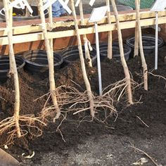 Growing Perfect Fruit Trees: A Guide to Bareroot Planting - Organic Gardening - MOTHER EARTH NEWS