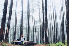 Beginilah indahnya kabut setelah turun hujan Subhanallah .  Inframe: Me  Location: Hutan Pinus Cikole Lembang Westjava  Taken by: @kamanaweh_ .  #liveadventurously #adventures #folkscenery #folks #folkportraits #followforfollow #folkcreatives #folkworld #potraits #potraitpeople #keluarsebentar #kerengan  #explorejabar #indonesiantraveler #helloindonesian #livefolk #vsco #vscogood #feedbacknation #vscomood #photooftheday #livefolkindonesia #nature #igers #travelgram #traveler #folkvibe…