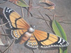 Ulla Taylor 3d pavement chalk art butterfly Painted LadyIMG_3136.JPG (1280×960)